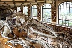 Museo de la etnología en París fotos de archivo