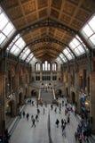 Museo de la historia natural Imagenes de archivo