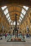 Museo de la historia natural Imagen de archivo libre de regalías