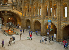 Museo de la historia natural Foto de archivo