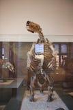 Museo de la historia natural Imágenes de archivo libres de regalías