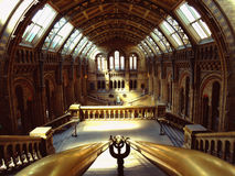 Museo de la historia natural fotografía de archivo