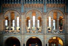 Museo de la historia natural de Londres Imagen de archivo libre de regalías