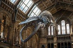 Museo de la historia natural en Londres foto de archivo