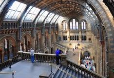 Museo de la historia natural, Londres foto de archivo