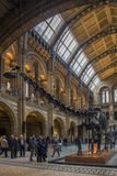 Museo de la historia natural - Londres - Inglaterra Foto de archivo