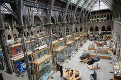 Museo de la historia natural, Oxford Fotos de archivo
