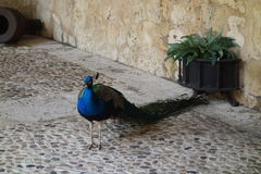 Museo De Las Casas Reales 4 Royalty Free Stock Image
