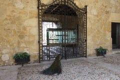 Museo De Las Casas Reales 36 Stock Image