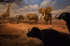 Museo de Los Ángeles de la historia natural 2 Fotos de archivo