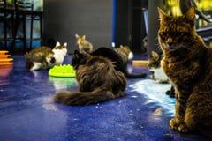 Museo de los gatos Imagen de archivo libre de regalías