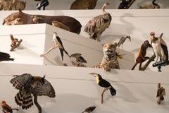 Museo de Melbourne Imagen de archivo libre de regalías