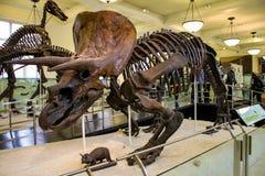 Museo de Nueva York de la historia natural Foto de archivo libre de regalías