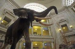 Museo de Smithsonian del interior de la historia natural Fotos de archivo