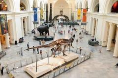 Museo del campo del Chicago di storia naturale Fotografia Stock Libera da Diritti