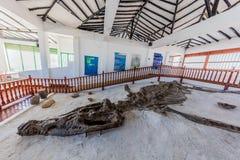 Museo Del Fosil dinosaur fossil Museum Villa de Leyva Boyaca Col Royalty Free Stock Photos