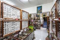 Museo del insecto del mundo Foto de archivo libre de regalías