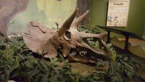 Museo del parco di stato di Makoshika Fotografia Stock