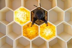 Museo dell'ape nel villaggio di Pastida La Grecia 30/05/2018 Mostra gigante dell'ape su esposizione Isola di Rodi europa fotografia stock libera da diritti