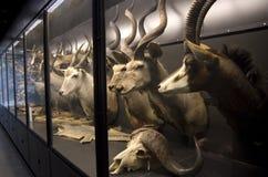 Museo di biodiversità di Beaty Fotografia Stock