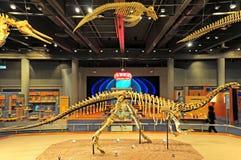 Museo di Hong Kong dei fossili Fotografie Stock Libere da Diritti