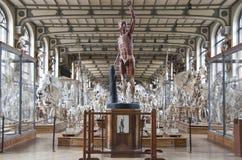 Museo di storia naturale Fotografie Stock Libere da Diritti