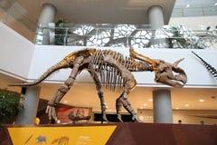 Museo di storia naturale di Shanghai Immagini Stock