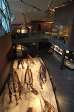 Museo di storia naturale di Shanghai Fotografia Stock