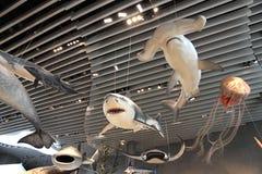 Museo di storia naturale di Shanghai Fotografie Stock Libere da Diritti