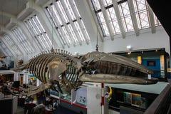 Museo di storia naturale a Londra fotografie stock