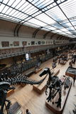 Museo di storia naturale a Parigi Immagine Stock