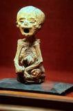 Museo Guanajuato, Messico della mummia Fotografia Stock Libera da Diritti