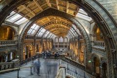 Museo Londres de la historia natural Imágenes de archivo libres de regalías