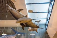 Museo Museu DA Baleia, Canical, Madeira de la ballena Foto de archivo