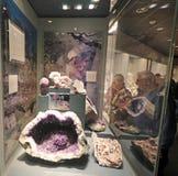 Museo Nacional de la historia natural imagen de archivo libre de regalías