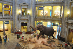 Museo Nacional de la historia natural Foto de archivo libre de regalías
