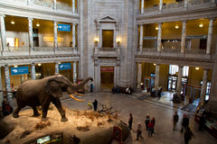 Museo Nacional de la historia natural foto de archivo