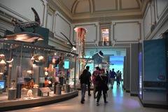 Museo Nacional de la historia natural en Washington, DC imagen de archivo libre de regalías