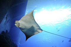 Museo Nacional de Marine Biology y del acuario Fotografía de archivo libre de regalías