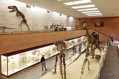 Mesozoico foto de archivo