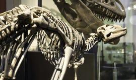 Museo paleontologico a Berlino Immagine Stock Libera da Diritti