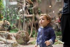 Museo que visita del niño Imagen de archivo libre de regalías