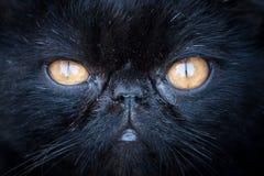 Museruola del gatto nero Fotografie Stock