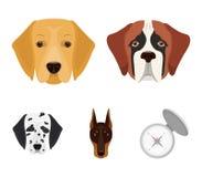 Museruola delle razze differenti dei cani Cane della razza St Bernard, golden retriever, doberman, raccolta stabilita di dalmata Fotografia Stock Libera da Diritti