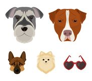 Museruola delle razze differenti dei cani Insegua la razza Stafford, lo Spitz, Risenschnauzer, icone stabilite della raccolta del Fotografia Stock