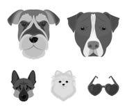 Museruola delle razze differenti dei cani Insegua la razza Stafford, lo Spitz, Risenschnauzer, icone stabilite della raccolta del Immagine Stock