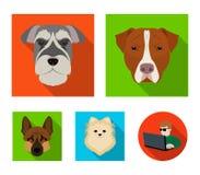 Museruola delle razze differenti dei cani Insegua la razza Stafford, lo Spitz, Risenschnauzer, icone stabilite della raccolta del Immagini Stock