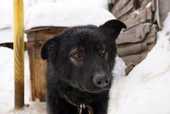Museruola di un cane nero Fotografia Stock Libera da Diritti