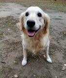 museruola di un primo piano del cane Fotografia Stock Libera da Diritti