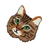 Museruola, siluetta di un gatto rossastro-dai capelli con i pixel assorbiti degli occhi verdi, quadrati Immagine del ritratto di  fotografia stock